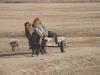 charette_a_chameau_mongolie