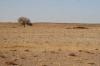 desert_mongole