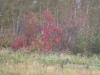 voila-l-automne-1