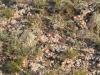 premiere-flore-de-mongolie-2