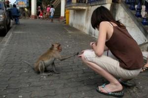ville aux singes