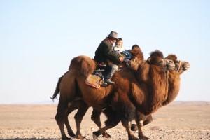 famille à chameau