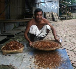 marchand de piment