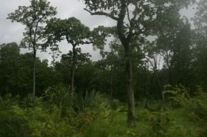 paysage bufard cambodge