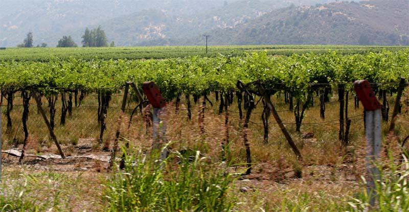vignes cafayate